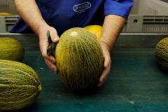 Melons Oro Cuiper